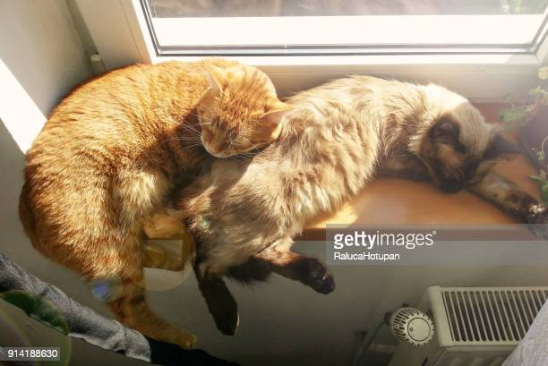 two lazy cats sleeping together in the sunlight on window sill