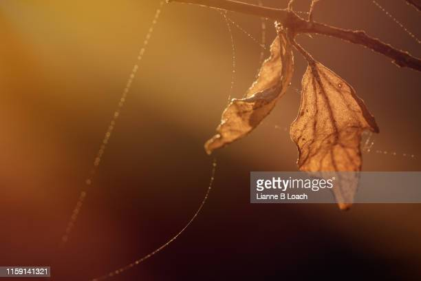 two leaves - lianne loach stock pictures, royalty-free photos & images