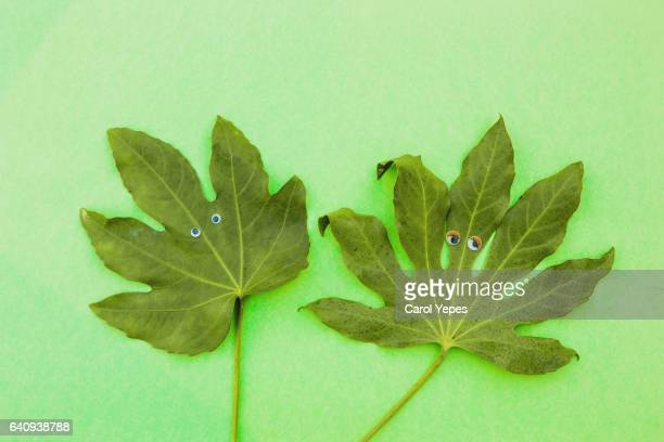two leaves with fake eyes in green background