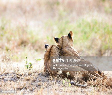 Two Lion Cubs in Tarangire, Tanzania
