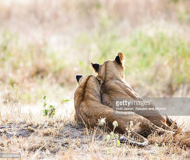 Two Lion Cubs in Tarangire, Tanzania