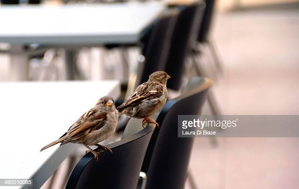 Two little birds perched on the back of a chair