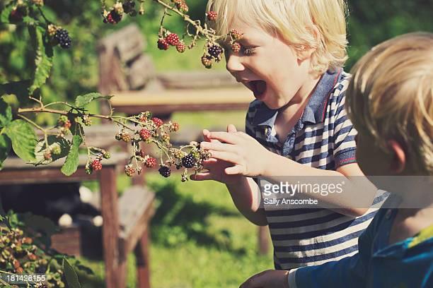 Two little boys picking blackberries