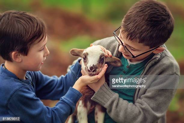 two little boys taking care of a newborn lamb