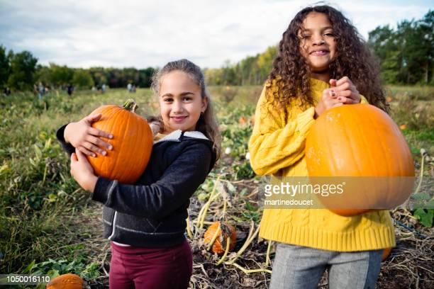 "two little girls picking pumpkins in field. - ""martine doucet"" or martinedoucet imagens e fotografias de stock"