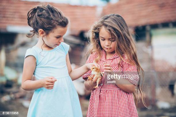 Two little girls with baby chicken