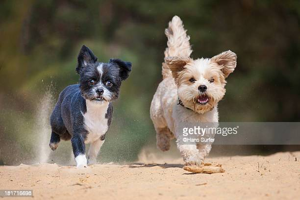 Two little running dogs.!
