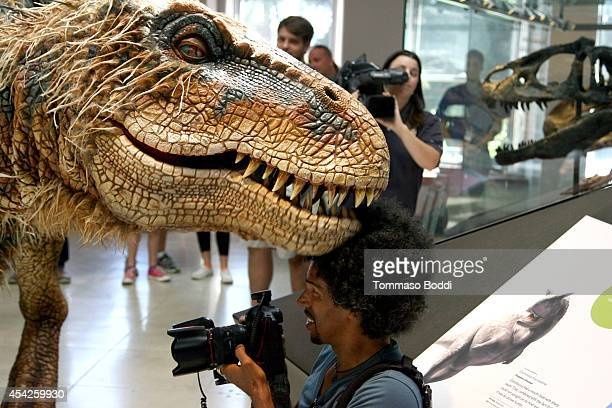 Two live dinosaurs meet at Natural History Museum on August 27 2014 in Los Angeles California