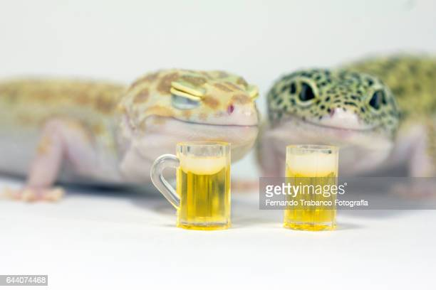 Two lizards toast with beer mug celebrating the new year