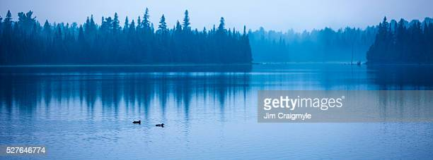 two loons on a lake just before sunrise - jim craigmyle stock pictures, royalty-free photos & images