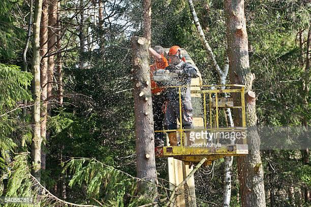 Zwei Holzfäller Schneiden einen Baum auf der Plattform