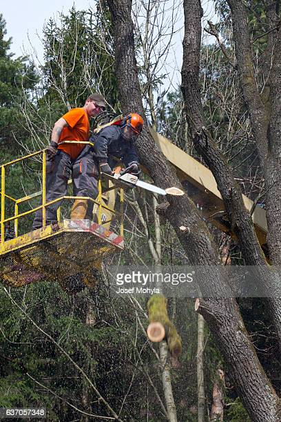 Two lumberjacks cut down a tree on the platform