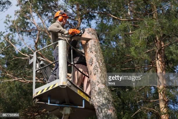 Two lumberjacks cut down a tree on the platform