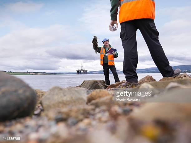 Two male environmentalists checking seaweed samples on seashore