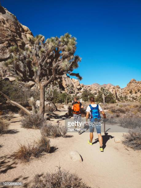 two male hikers passing by a joshua tree in joshua tree national park - joshua tree stock photos and pictures