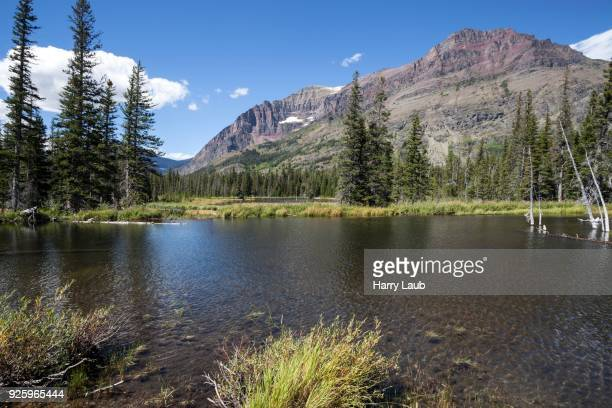 two medicine lake, rising wolf mountains at back, glacier national park, montana, usa - two medicine lake montana stock-fotos und bilder