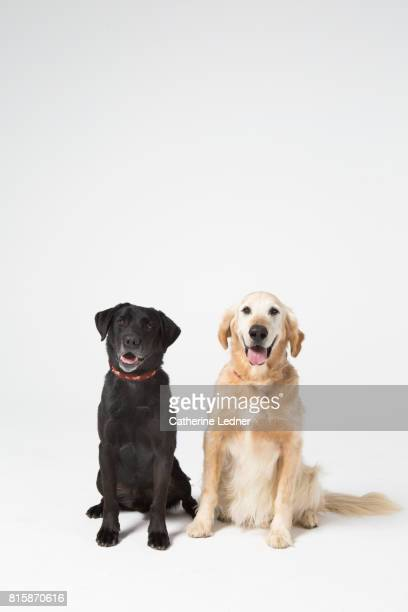 Two medium sized dogs sitting side by side