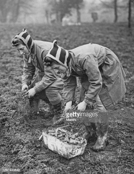 Two members of the Women's Land Army hand picking carrots on 3rd January 1941 on farmland at Usk in Monmouthshire, South Wales, United Kingdom. The...