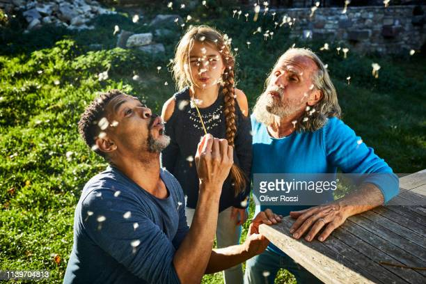 two men and girl blowing blowball in garden - genderblend stock pictures, royalty-free photos & images
