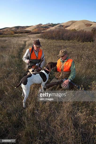two men, bird hunters, with shotguns, carrying the days bag of dead birds, and a spaniel dog.  - dead dog imagens e fotografias de stock