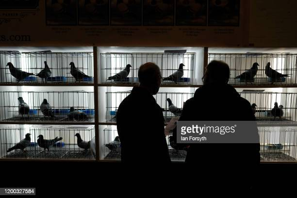 Two men browse a display of pigeons for sale on the first day of the annual British Homing Pigeon World Show of the Year at Blackpool Winter Gardens...