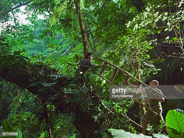 two men carrying a ladder through the forest - las posas stock pictures, royalty-free photos & images