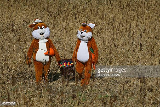 Two men disguised as Easter Bunnies carry a basket with Easter eggs through a meadow on March 17 2008 next to the adventure train in Mellensee...