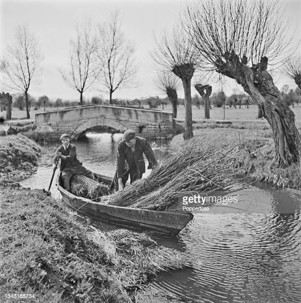 Two men paddle a boat filled with bundles of cut willow rods harvested from willow trees lining the banks of a waterway on the Somerset Levels in...