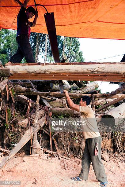 two men sawing trunk pelling sikkim india - pavliha stock photos and pictures
