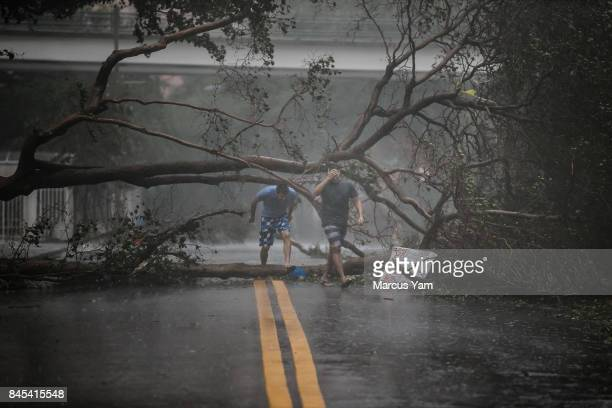 Two men walk through a downed tree as Hurricane Irma's full force strikes in Miami Fla on Sept 10 2017