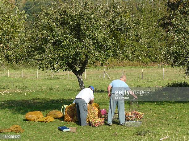 Two men with cider apples