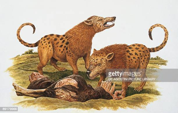 Two mesonyx standing near a dead animal