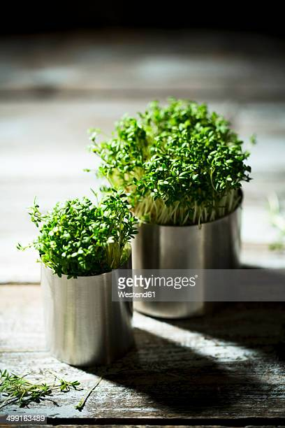 Two metal flowerpots of garden cress on wooden table