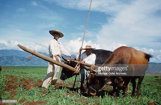 Two Mexican farmers pose in the fields with their ox and plow in Mexico