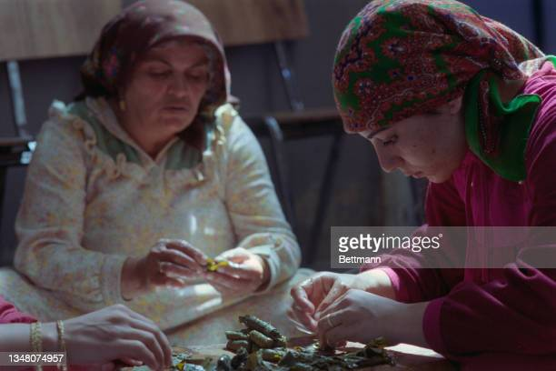 Two Middle Eastern women wearing headscarves as the prepare dolma, stuffed vine leaves, on a wooden board, with a third set of hands to the left of...