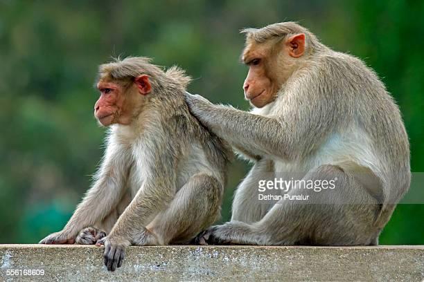 Two monkeys sitting