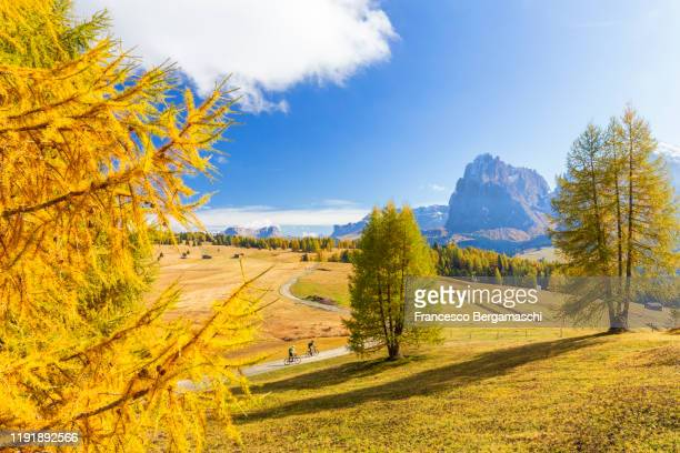 two mountain bikers is riding on a track in front sassolungo group in the dolomites. - italia stock-fotos und bilder