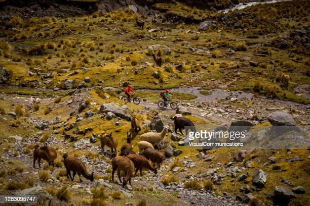 two mountain bikers with backpacks on adventure in cold andes. llamas in foreground - south america stock pictures, royalty-free photos & images