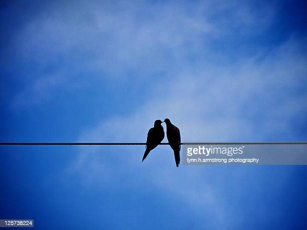 Two mourning doves on wire