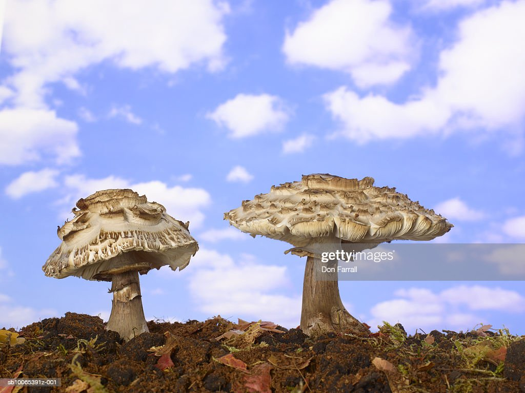 Two mushrooms against blue sky (Digital composite) : Foto stock
