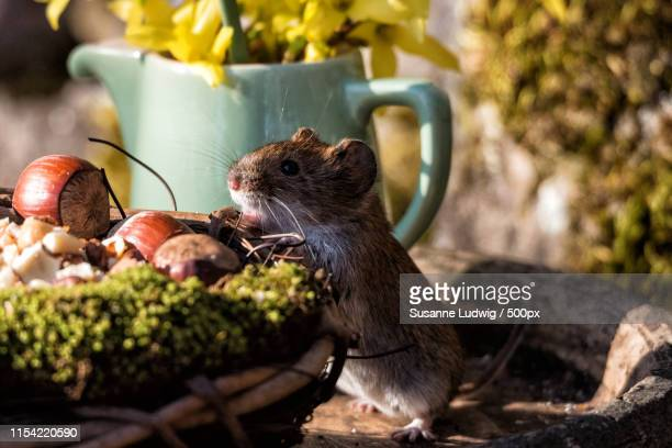 two nuts for free, please! - susanne ludwig stock pictures, royalty-free photos & images