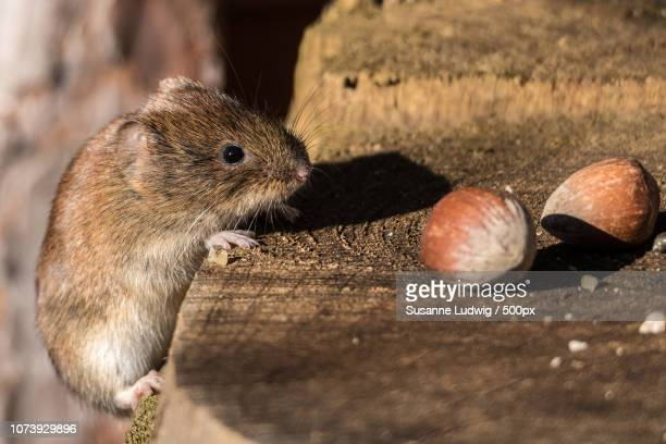 Two Nuts for Mouse
