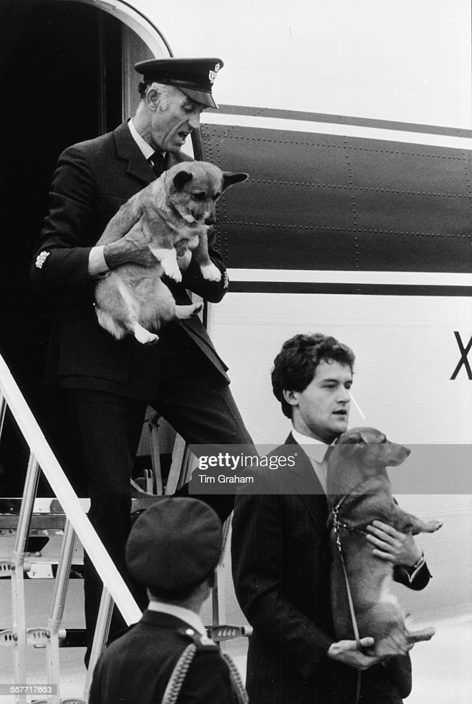 two-of-the-pet-corgis-of-queen-elizabeth-ii-being-carried-from-an-by-picture-id557717653