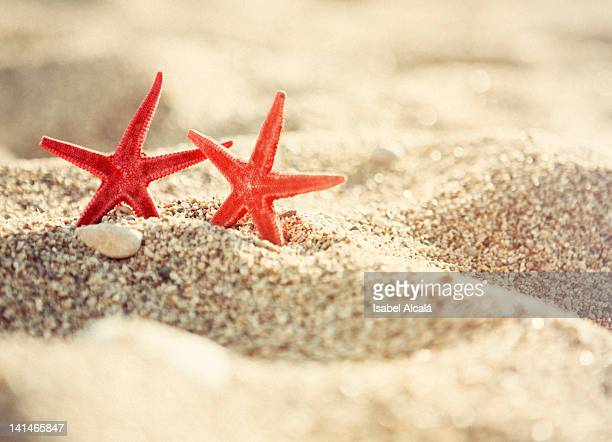 Two orange star fish on beach in Altea