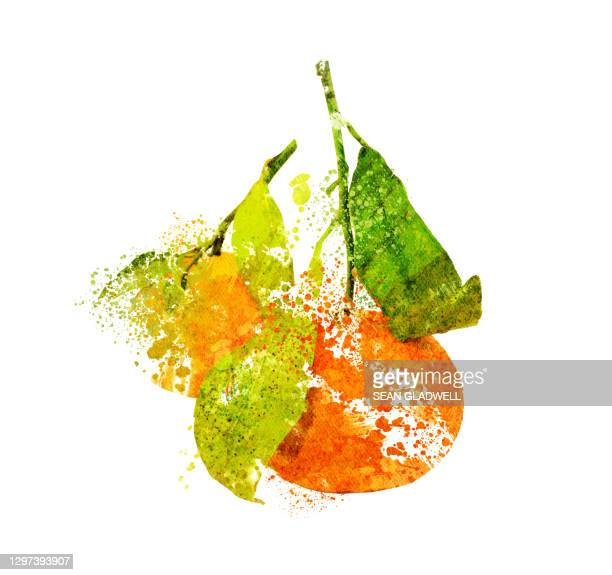 two oranges illustration - illustration stock pictures, royalty-free photos & images
