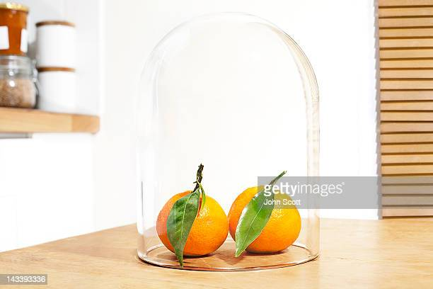 Two oranges protected under a glass dome (cloche)