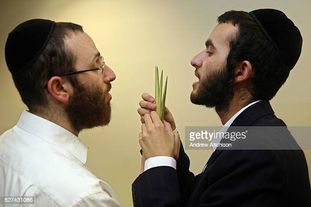 Two Orthodox Jewish men select their Lulav for the festival of Sukkot, the feast of Tabernacles. The Lulav is a Palm frond used in the mitzvah of the...