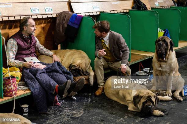 Two owners chat as they sit with their Mastiffs at the Crufts dog show at the NEC Arena on March 8 2018 in Birmingham England The annual fourday...