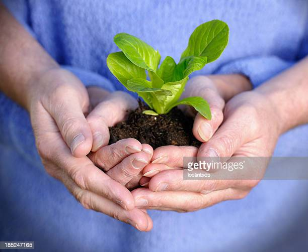 Two Pair Of Hands Holding A Plant