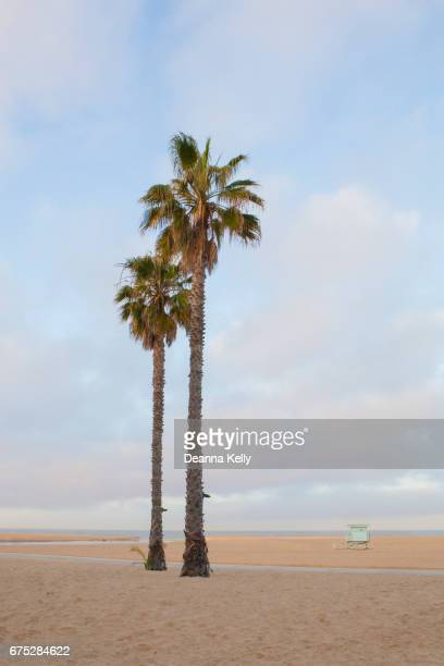 Two Palm Trees and Lifeguard Stand on Tranquil Santa Monica Beach